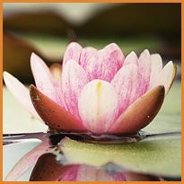 Yoga al femminile per il bacino e il perineo